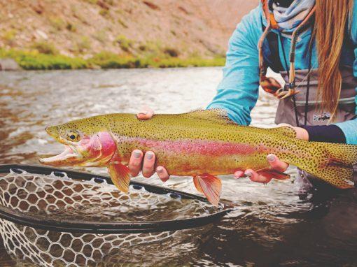 Gunnison River, Colorado